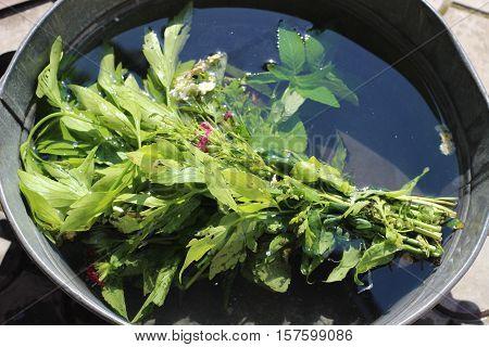 Herbal lovage in the pelvis with water