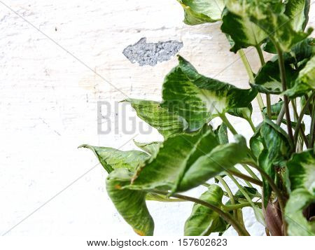 Green Leaves On Grung Wallpaper Background