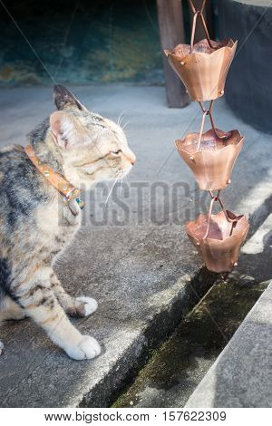 Cat looking rain water bell in garden stock photo