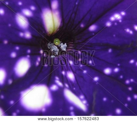 macro photos for the source as a background in design and photo shop beautiful flower Viola colors of the sky and space