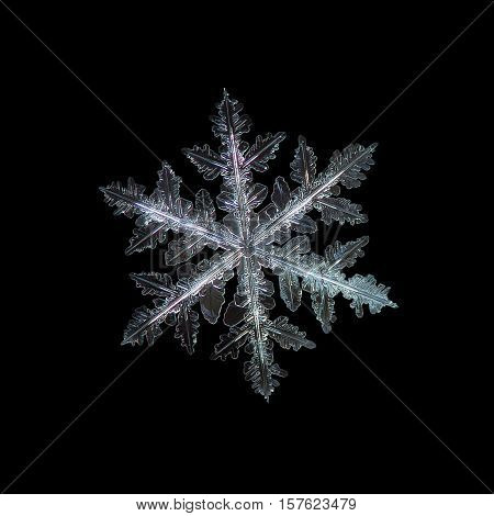 Snowflake isolated on black background. This is macro photo of real snow crystal: large stellar dendrite with traditional shape, complex structure and ornate arms with lots of side branches and small details.
