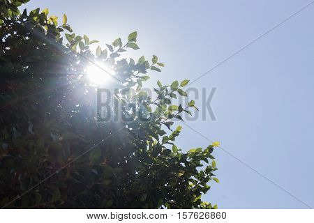 Green leaves with summer blue sky stock photo