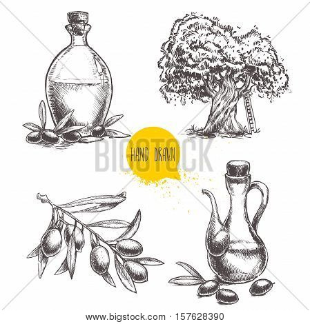 Hand drawn set of olive branch with olives bottles with olive oil and olive tree. Sketch style vector organic food illustration.