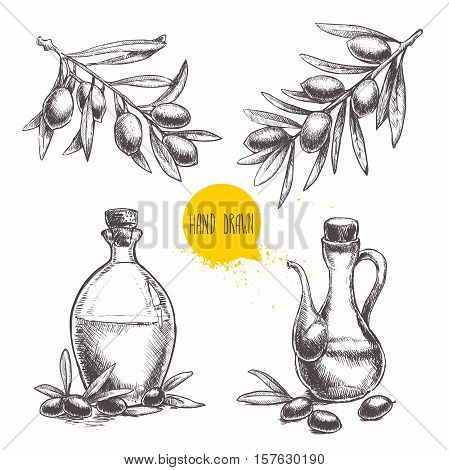 Hand drawn set of olive branches with olives and bottles with olive oil. Sketch style vector organic food illustration.