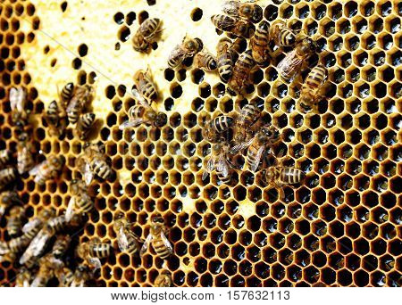 Bees in the hive convert nectar to honey.