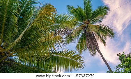 Coconat Palm on the Beach of Gam Island. Raja Ampat, Indonesia, West Papua.