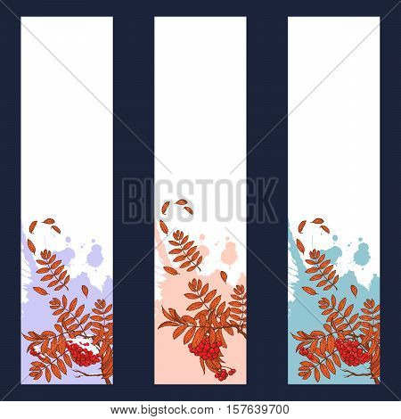 Set of 3 Autumn Rowanberry vertical banners. Rowanberry brunch with leaves and berries. Sticker, flyer or banner design template. EPS10 vector illustration