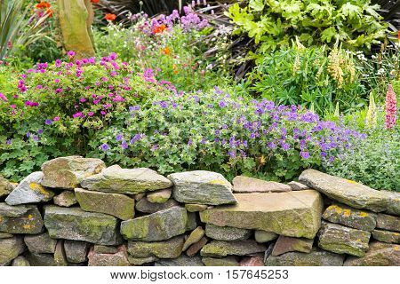 Colourful flowers in scottish garden with drystone dyke