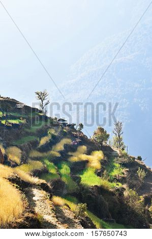 Rice and wheat crop terraces colored in gold and green