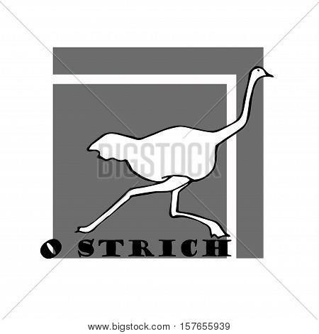 Hand sketch of ostrich. funny ostrich draw.