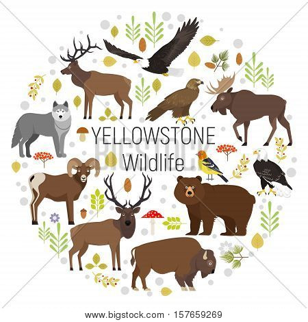 Circle vector set of plants and Yellowstone National Park animals grizzly, moose, elk, bear, wolf, golden eagle, bison, bighorn sheep, bald eagle, western tanager, isolated on transparent background