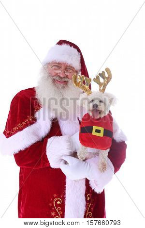 Santa Claus smiles as he holds a Smiling Bichon Frise dog. Isolated on white with room for your text.