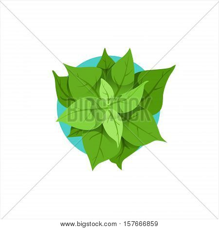 Green Plant In Pot Office Worker Desk Element Part Of Workplace Tools And Stationary Set Of Objects. Items For Fully Equipped Working Table Vector Illustration With View From Above.