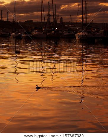 Orange dramatic sunrise with the fishing boats in background and lonely duck swimming in the sea in Marsaxlokk, Malta. Travel destination Malta. Wild bird in sunset. Dramatic sunset. Malta, Europe