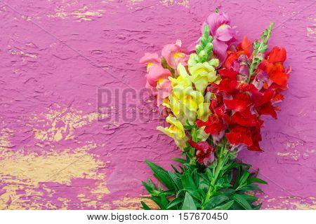 Bouquet Of Gladiolus On Colorful Background
