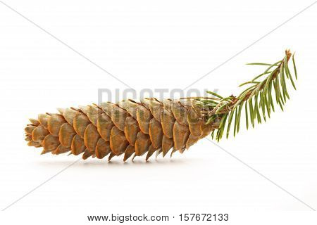 Pine Cone With Small Fir Branch