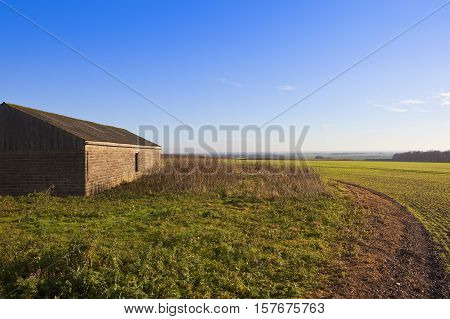 Farm Building And Wheat Crop