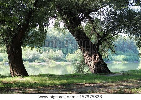 Tributaries of the Danube River. Trees near water