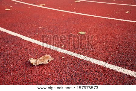 dried maple leaf on athletic race track