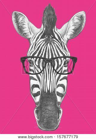 Portrait of Zebra with glasses. Hand drawn illustration.