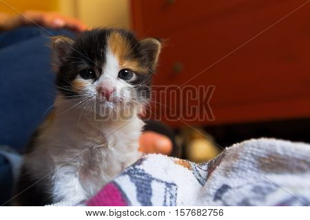 Baby cat after drinking milk at home