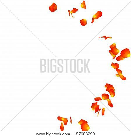 Yellow Rose Petals Scattered On The Floor In A Semi-circle. 3D Illustration
