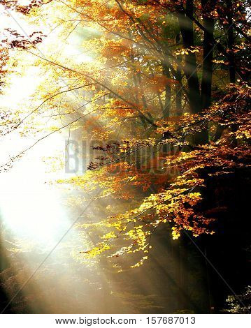 an autumn landscape. leaves best express the autumn. a plurality of colors