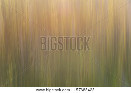 Abstract background photo obtained by vertical movement parallel to the lines of the stems of the plants