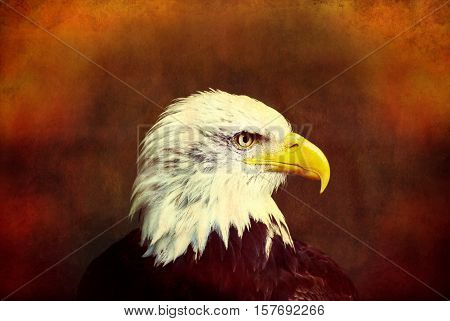 Profile of a bald eagle on grunge background.