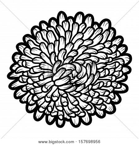 Coloring book for children, colorless flower Aster