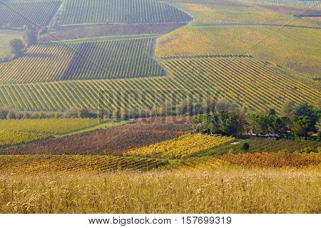 vineyards in autumn colors vineyards in the mountains of Italy