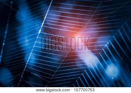 beauty design spider web spiderweb blue macro background cobweb technology hacker - stock image