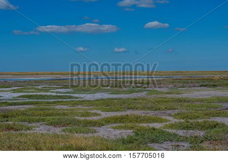 Scenic steppe landscape with dried yellow grass and drying ponds with dirty water and blue sky in Kherson region Ukraine