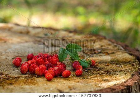 Wild Strawberries In The Season Of Harvest
