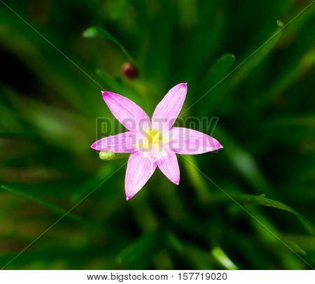 Vintage landscape nature flower background Pink flower with light bokeh nature blure background low key tone