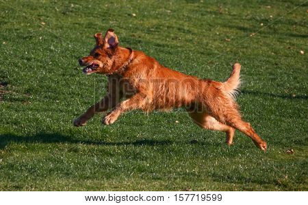 a dog running up a hill in a park enjoying the outdoors on a beautiful summer day