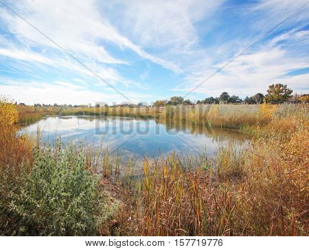 a landscape of fall on a bright autumn day in a local public park with a small pond surrounded by reeds