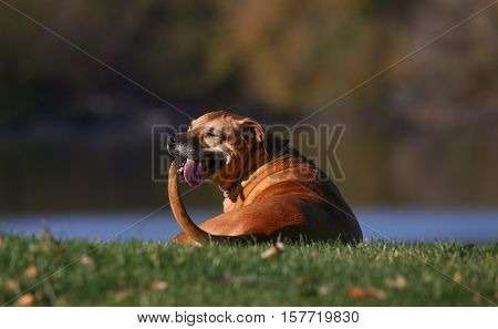 a happy excited dog sitting up a hill in a park enjoying the outdoors on a beautiful summer day