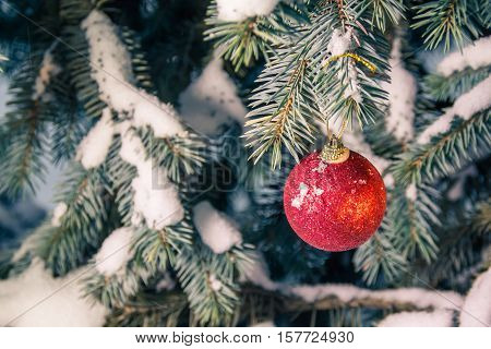 Snow covered spruce with a red christmas ball in soft focus