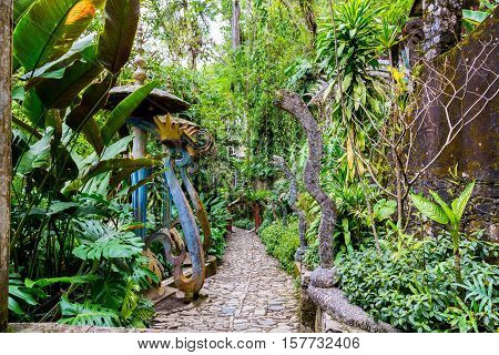 Concrete shapes on a jungle path in the cloud forest of central Mexico..