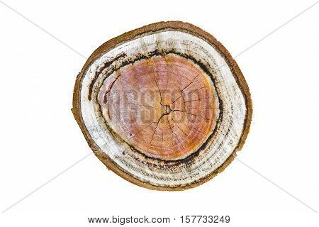natural wood texture of cut tree trunk with annual rings wooden background