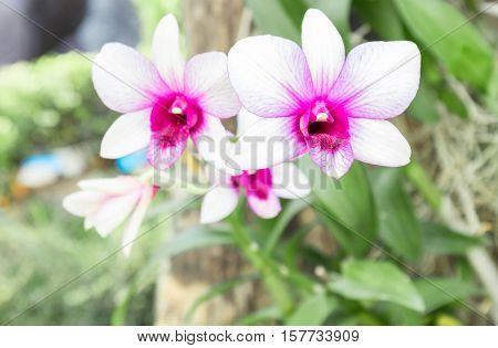 Orchid flower on the garden, Flowers bloom in the garden
