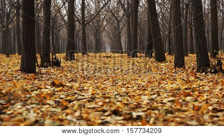 yellow autumn leaves covering wooded outdoor floor