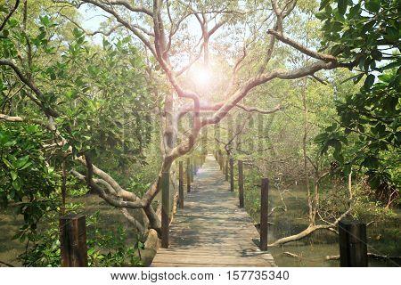 Mangrove forest under the beam of light