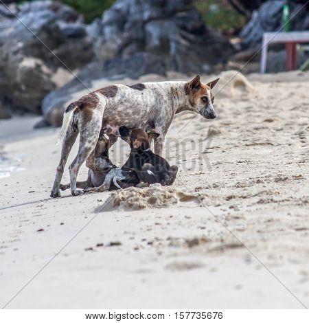 mother dog feeding the baby dog , On the beach