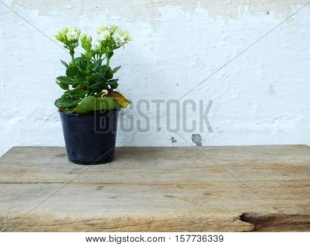 white flower plant on woodden with space copy