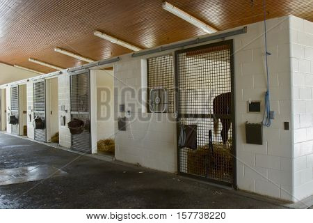 Horse standing in stall of equine hospital facility.