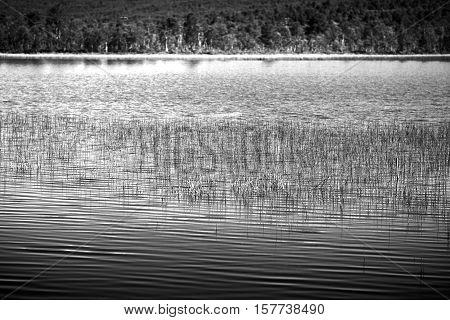 Grass blades in Norway lake landscape background hd