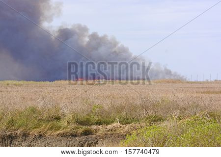 Flames in a Wildfire in the Bayou in the Sabine National Wildlife Refuge in Louisiana