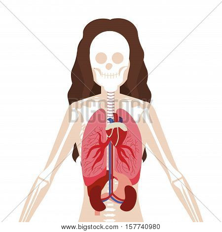 half body woman with inner organs and bones vector illustration